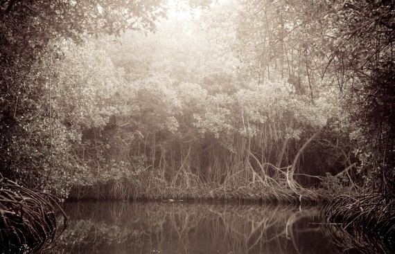 Moises Esquenazi - Work - Photography - Groves 2