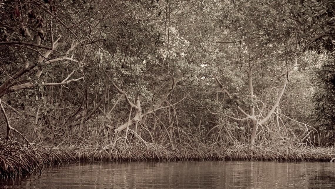 Moises Esquenazi - Work - Photography - Groves 4