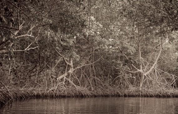 Moises Esquenazi - Work - Photography - Groves 3