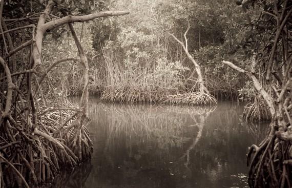 Moises Esquenazi - Work - Photography - Groves 1