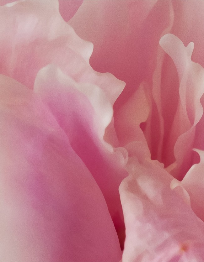 Moises Esquenazi - Work - Photography - Petals 8