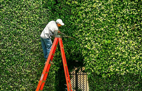Moises Esquenazi - Work - Photography - Hedges 1