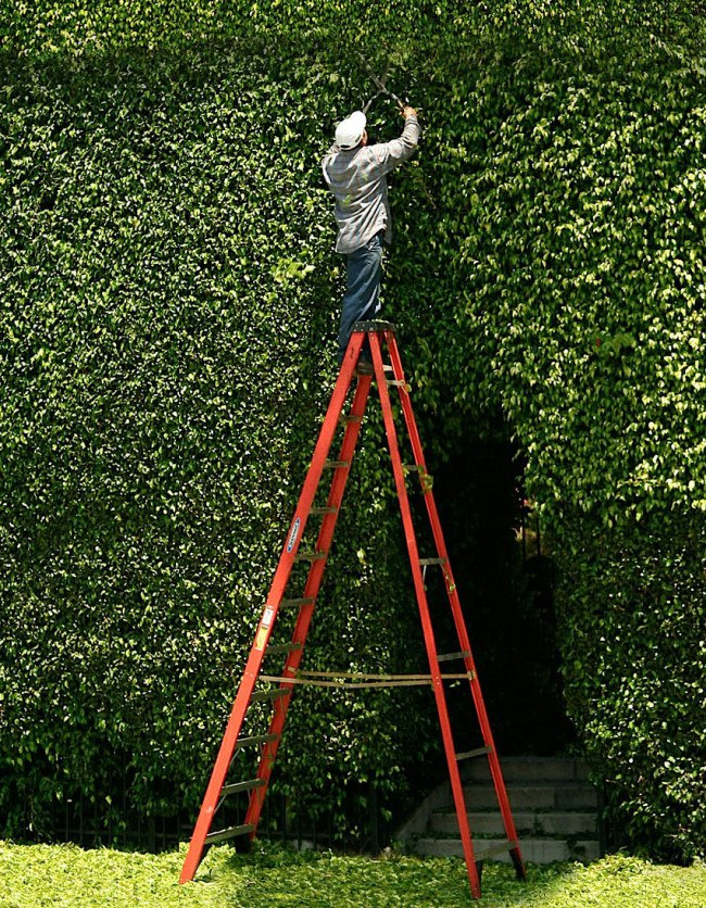 Moises Esquenazi - Work - Photography - Hedges 2